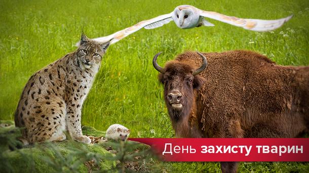 Всемирный день защиты животных 2017