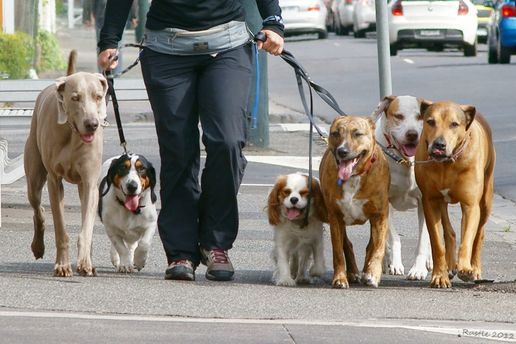 Домашніх тварин заборонили вигулювати біля київських лікарень і дитячих установ