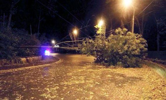 Ураган во Львове поломал деревья