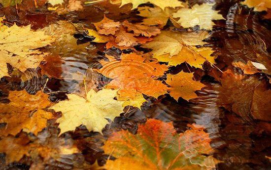Прогноз погоди в Україні на середу, 11 жовтня
