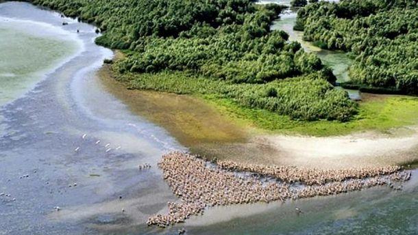 Дельта Дунаю щороку міліє