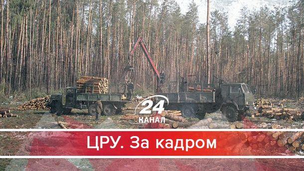 Що насправді коїться в українських лісгоспах: вражаюче розслідування