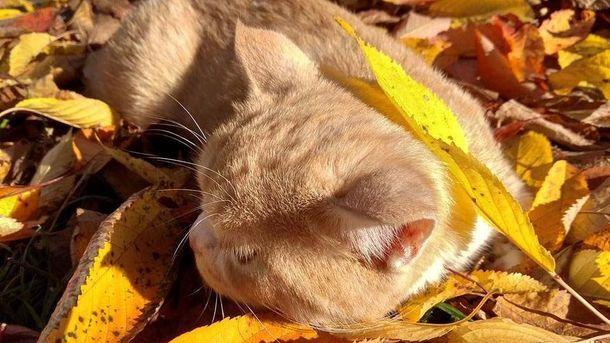 Погода 20 жовтня в Україні буде ще сонячною, але з незначним похолоданням