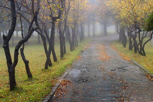 Погода на 24 жовтня: холодно, вітряно та туманно