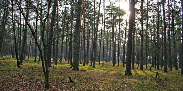 Такую ужасную находку обнаружили на территории лесничества в районе поселка Коцюбинское