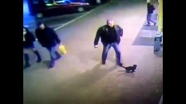 Белорусского милиционера органов внутренних дел уволили за то, что он пнул котенка