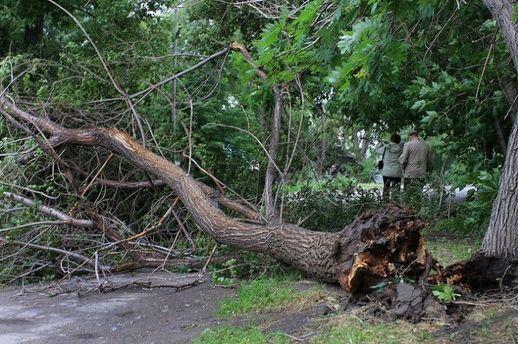 Дерево упало наребенка наПрикарпатье