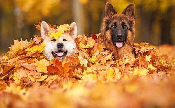 Погода на 14 листопада: в частині України буде по-весняному тепло