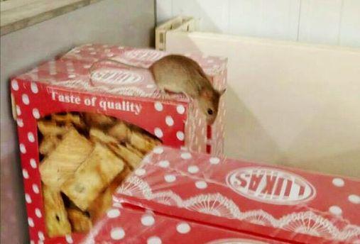 Миша в київському  супермаркеті