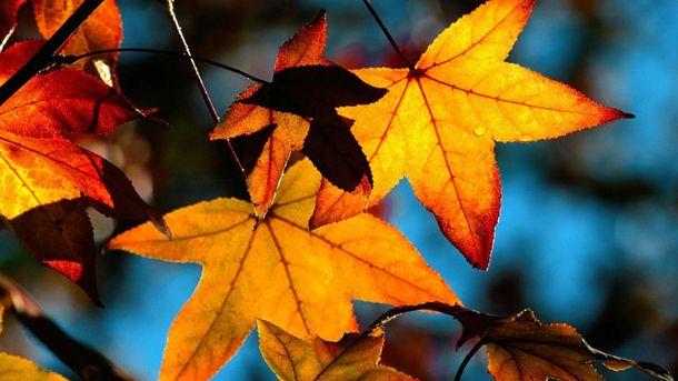 Погода на 16 листопада: українців чекає рідкісний для осені день
