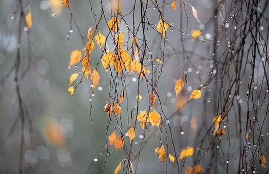 Погода на 19 листопада: сильний вітер, дощі та мокрий сніг