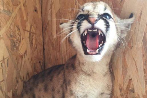 УРФ відвідувачі приморського зоопарку напали натварин