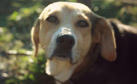 Брати наші менші: новації українського законодавства стосовно захисту тварин