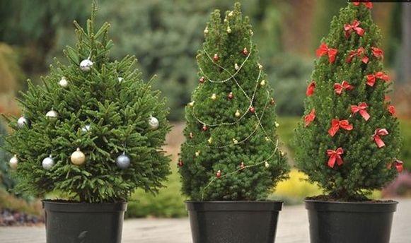 Вгосударстве Украина начинается продажа новогодних елок: названа цена