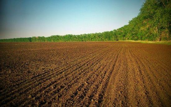 Верховна Рада продовжила мораторій на продаж землі
