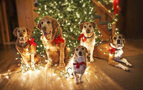 Как встретить новый год Собаки 2018: правила фэншуй