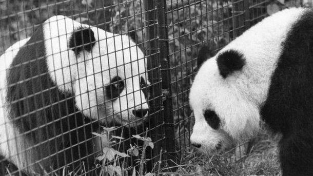 Тэтчер в далеком 1981 году отказалась везти панду вСША всвоем самолете