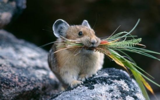 ВКазахстане мыши забрались вбанкомат исъели все деньги