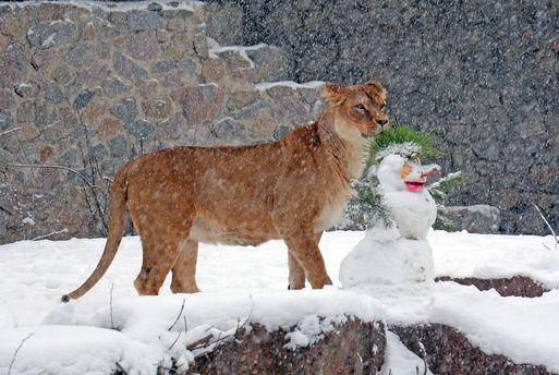 Тварини Київського зоопарку під час снігопаду: казкові фото