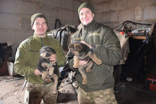Собаки в 44-й отдельной артиллерийской бригаде в зоне АТО