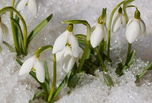 Погода на 29 січня: морози в Україні відступають
