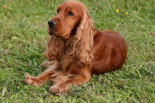 УЛьвові поліція затримала чоловіка, який вкрав і задушив собаку