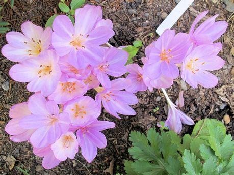 На Арабатской стрелке среди зимы зацвели первоцветы