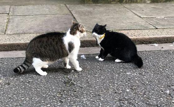 Вглобальной паутине сравнили драку 2-х основных котов Великобритании сситуацией вокруг Brexit