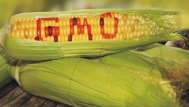 ГМО кукуруза полезна для здоровья