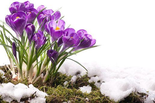 Погода на 22 березня: Снігопадів на завтра не обіцяють, потеплішає до +3°