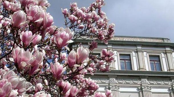 Квіти магнолії перетворили Стамбул на казкове місто: дивовижні фото