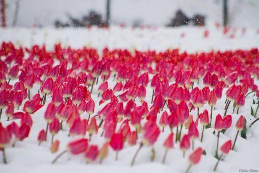 В Україну зайде короткочасне похолодання