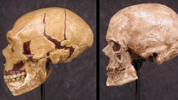 Внешность кроманьонца сшишкой налбу воссоздали антропологи
