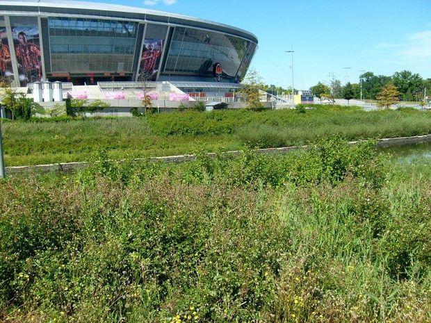 Занедбана територія навколо стадіону