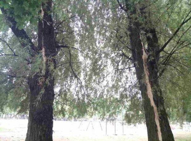Блискавка вбила двох людей у Львові