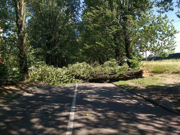 Вітер звалив дерево у Львові