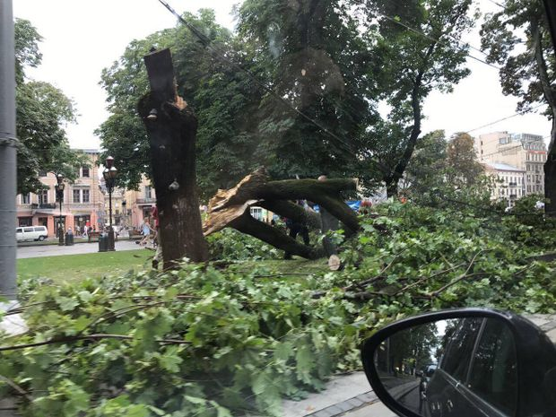 У центрі Львова впали дерева