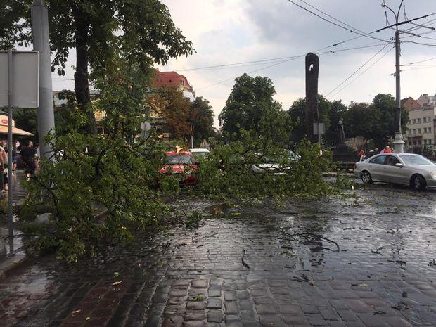 У Львові вітер звалив дерева
