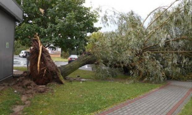 Сильні урагани сколихнули частину Польщі: дерева виривало зкорінням