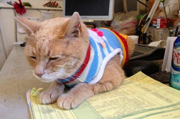 Помер кіт, який 19 років очолював місто наАлясці