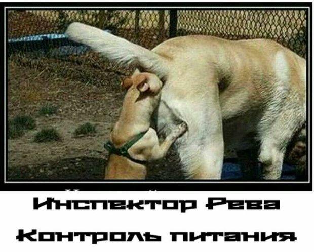 Рева звинуватив українців у тому, що вони багато їдять
