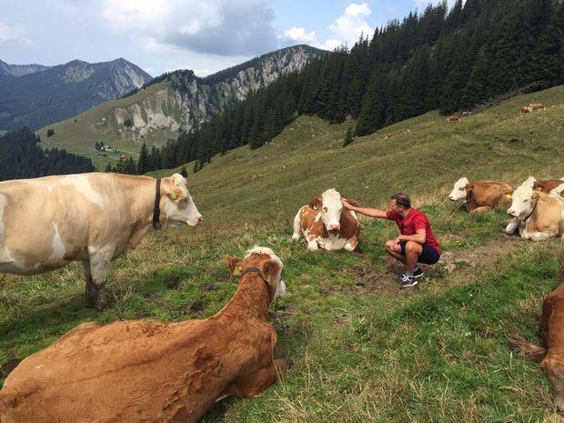 Ляшко і німецькі корови