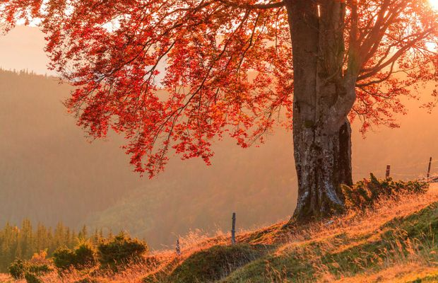 День осіннього рівнодення 2017: традиції