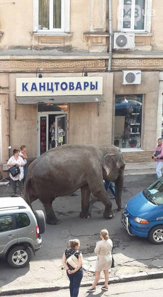 Слон в Одесі
