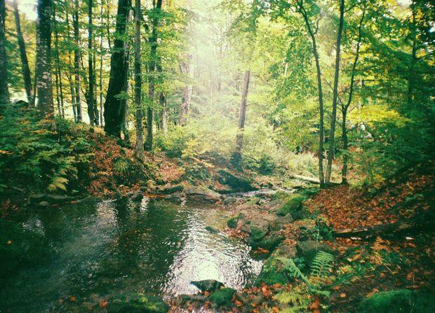 Над водоспадом Шипіт, (рання осінь)