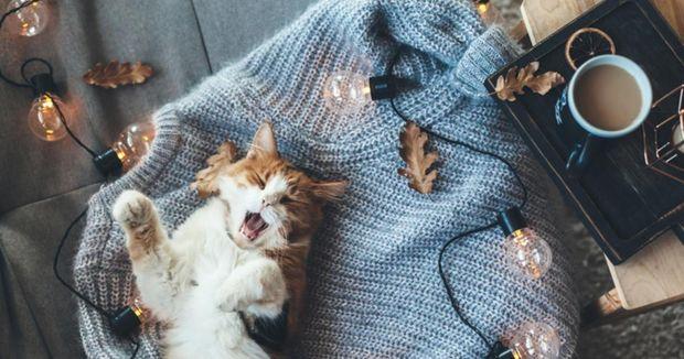 Теплий светр для осені