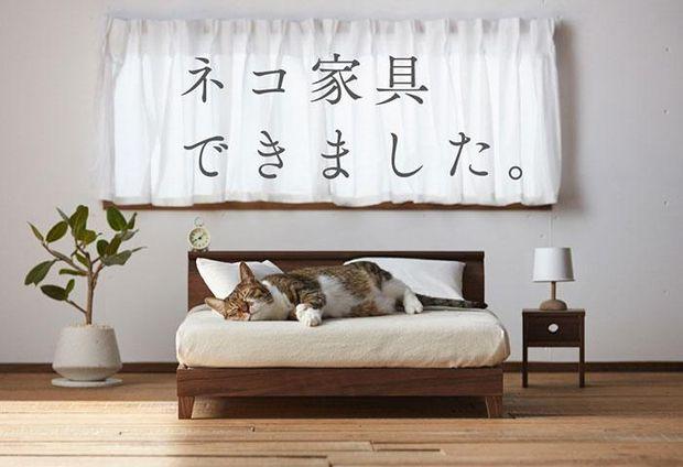 Меблі для котиків