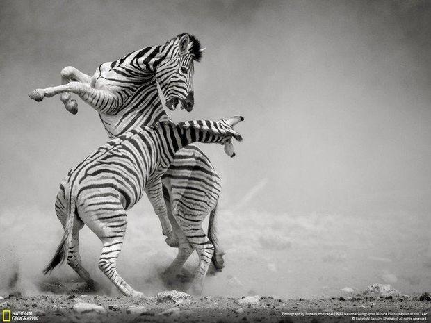 National Geographic опублікувало неймовірні фото учасників щорічного конкурсу