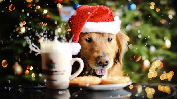 2018 – рік жовтої земляної собаки