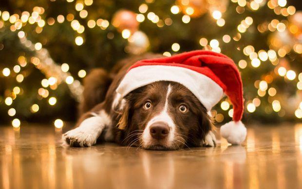 Новий Рік 2018 – рік земляної собаки